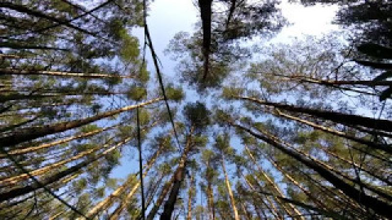 Звуки природы, пение птиц, весенний лес (1 час)