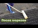 🍅 Посадка моркови весной по технологии Гордеевых