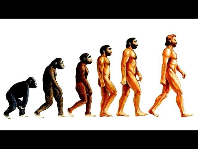 Теория эволюции Дарвина. Естественный отбор. Рассказывает Кирилл Юрьевич Еськов.