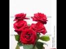 Пять алых роз дворовая 70 х Неизвестен исполнитель