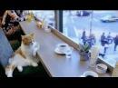 Rich_kernel_coffee video