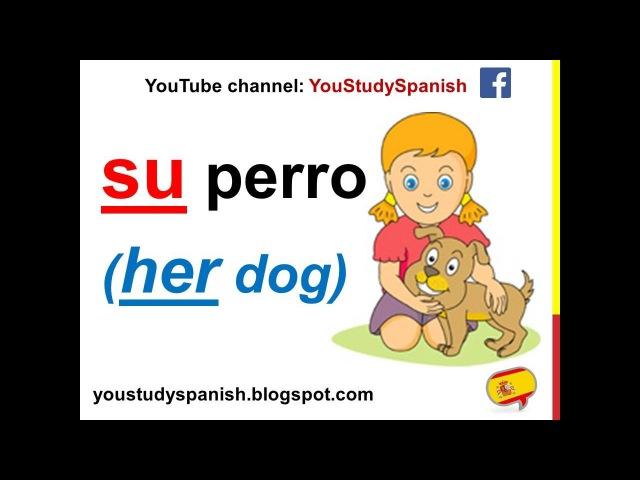 Spanish Lesson 51 - POSSESSIVE ADJECTIVES in Spanish Mi Mis Tu Su Nuestro Nuestra Vuestro Vuestra