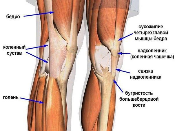 Как укреплять суставы и связки