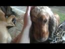 Один день из жизни в Dogs'House