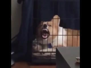 Злобный смех