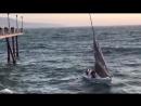 Видео В США люди чудом выжили, когда волна бросила их яхту на пирс