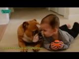 Любовь Животных к детям! Приколы с Детьми!