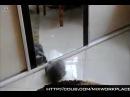 Ублюдок мать твою а ну иди сюда Cat version