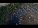 Круцянскі ролік як прыгожа лятуць Журавы Красивое видео как летят журавли Nature in Belarus Белсат