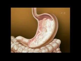 Пищеварительная система человека - как это работает