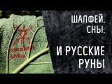 Шалфей, сны и русские руны