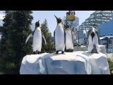 А теперь мы в гостях у Королевских пингвинов 🐧 🐧 🐧 В таком необычном здании они находятся 👀