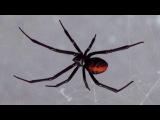 Жизнь и эволюция пауков рассказывает зоолог Даниил Осипов