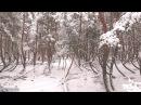 Танцующий лес. Видео квадрокоптер. Массив 2. Обзор и вид сверху.
