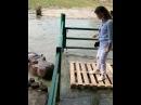 Ведущая телепроекта «Дом 2» Ксения Бородина кормит бегемота в зоопарке