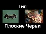 6  Тип Плоские черви - строение (7 класс) - биология, подготовка к ЕГЭ и ОГЭ 2018