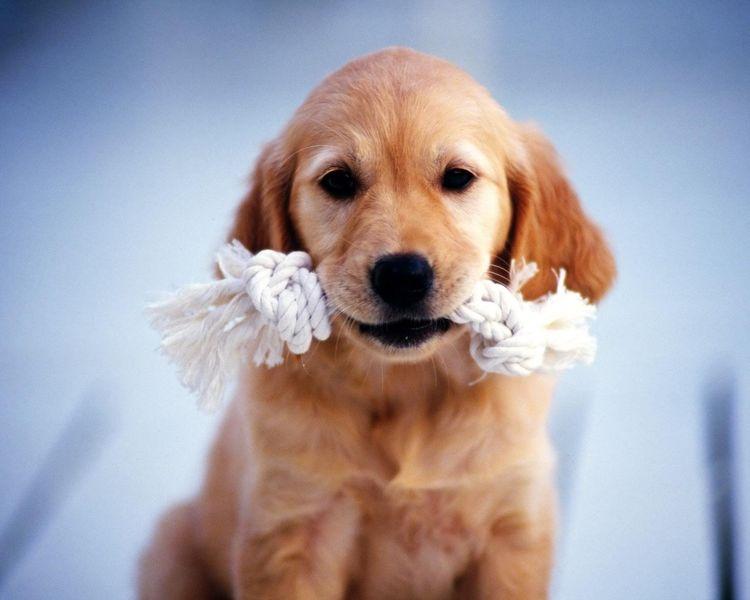 ИГРУШКА для собакина за 31 руб
