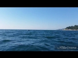 На сапе с дельфинами