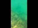 подводный мир красного моря))