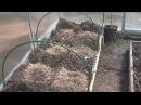Теплые лунки в теплице весной часть №1 Секреты хороших урожаев.