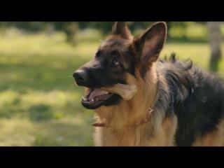 Как отучить собаку подбирать и есть на улице?