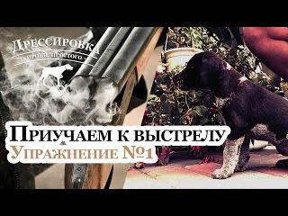 Как приучить щенка к выстрелу - Занятие №1 - Дрессировка дратхаара - Натаска легавой