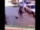 Кот охранник и дама с собачкой