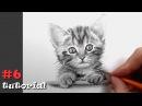 Как нарисовать кота карандашом подробный обучающий урок