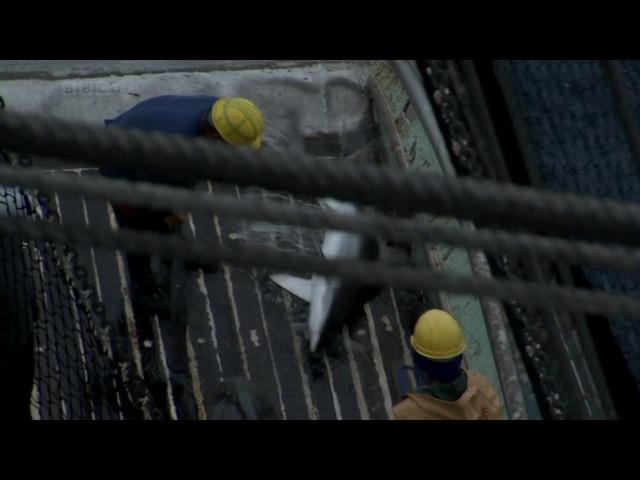 BBC Тайны Тихого океана: Хрупкий рай / 6 Серия