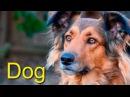 Домашние животные для детей на английском языке. Голоса животных. Как говорят жи...