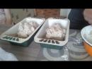 ВСС Сережа про хлеб