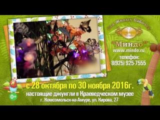 Сад Живых Бабочек Миндо в Комсомольске