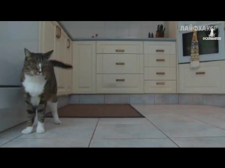 Самая умная кошка в мире