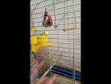 мой попугай