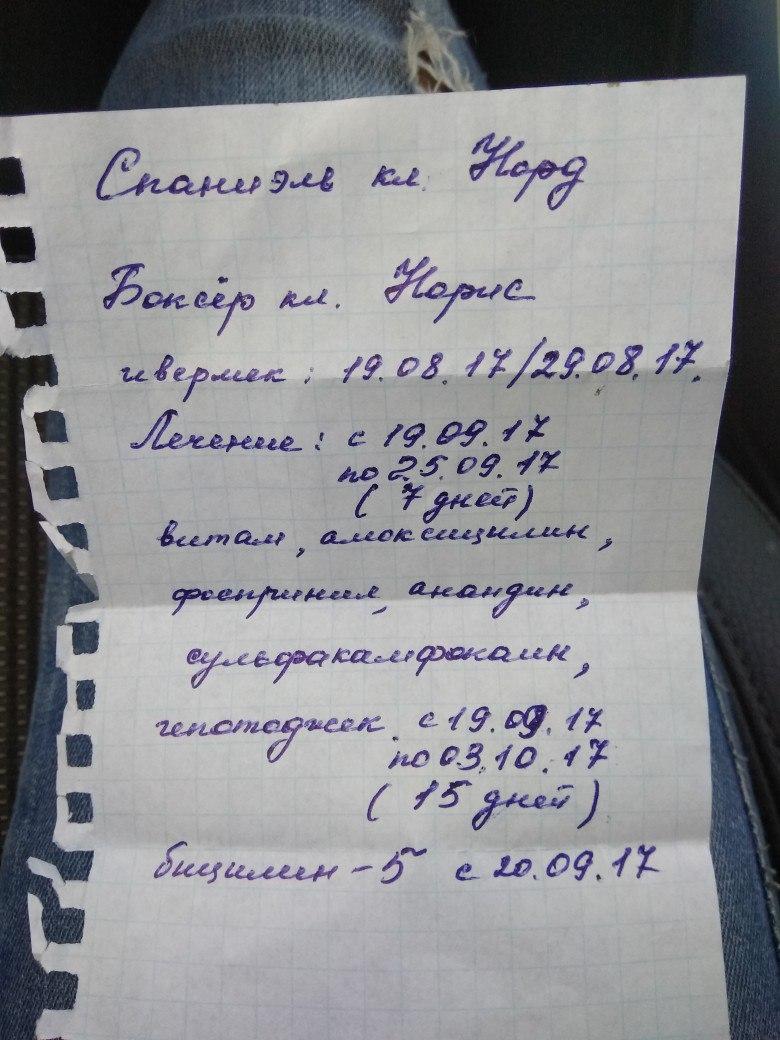 Москва, Норис, кобель 23.09.2004 MiFa0UJfeQY