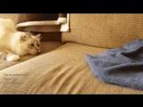 😱🐈🐡Не все то подушка, что лежит на диване