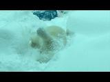 В зоопарке Орегона звери обрадовались снегу