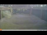 Горностай прыгает на батуте