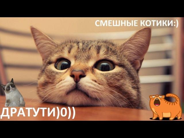 Без кота жизнь не та! Смешные котики, милые котики 777 FanCats Веселые котики и кошки