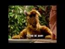 Alf Quote Season 2 Episode 4 5 Alf Cats Rus