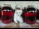 Смешные кошки приколы про кошек и котов 2017 39 Коты вредители Очень смешной выпуск