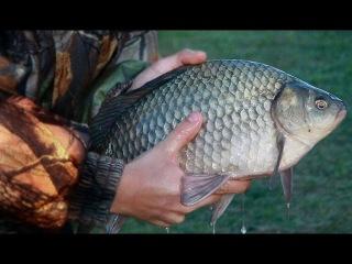 Правильная ловля Карпа! Куча рыбы в одном месте.