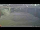 Горностай регулярно наведывался в сад, чтобы попрыгать на детском батуте