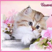 фото красивые открытки