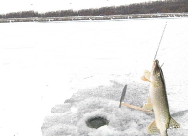 Харьковчанин нашел сюрприз в рыбе (ФОТО)