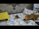 моя Котя Ася и собачка Джесси