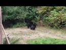 Канадец вежливо попросил семью медведей уйти с его двора
