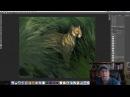 Aaron Blaise Live Stream - Digital Illustration Florida Panther