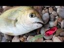 Rockfishing ранним утром. Огромный ёрш, рулена, ласкирь