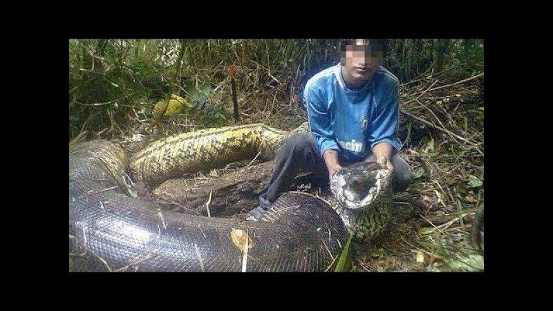 Самых Больших и Опасных Змей в Мире
